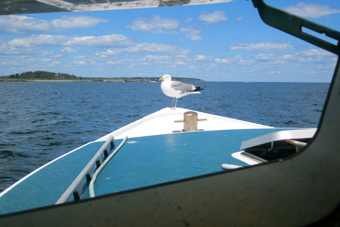 seagull on the bow