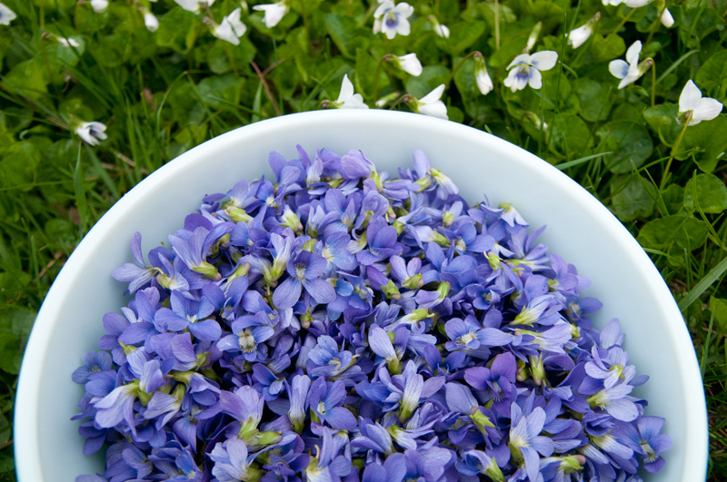 violets-in-a-bowl